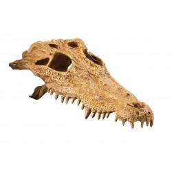 Czaszka krokodyla EXO TERRA