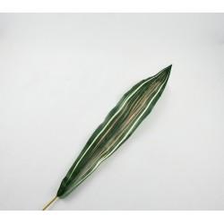 Liść dracena 50cm