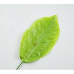 Liść mały intensywna zieleń